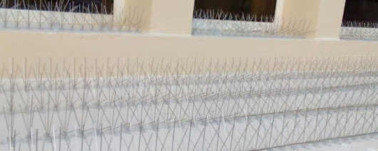Stainless Steel Spikes – Bird Control UAE- Pigeon Control