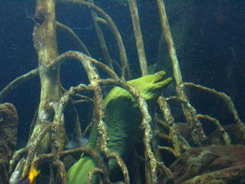 Creepy Eel