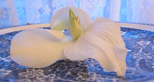 Amaryllis. Viimeinen kukka by Anna Amnell