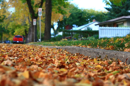 Everywhere Leaves OR SOTC 25/365 by gina.blank