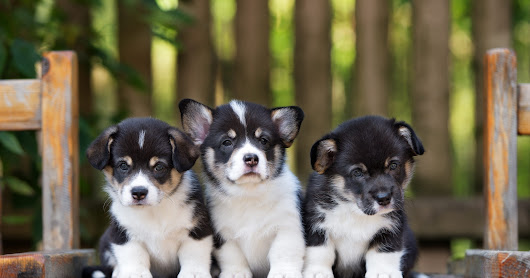 It's #NationalPuppyDay! America, here are your adorable, cute, awesome puppies