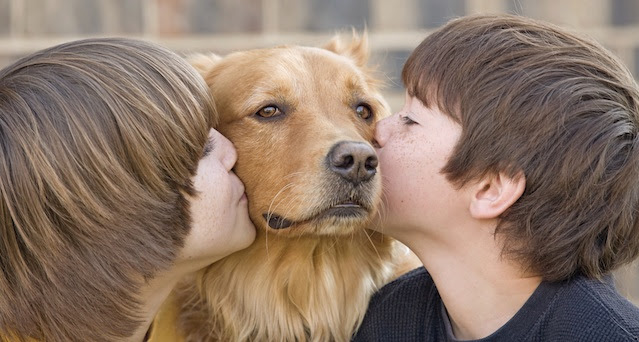 Social Media Marketing Ideas For Pet Shop Owners Projectsandimas