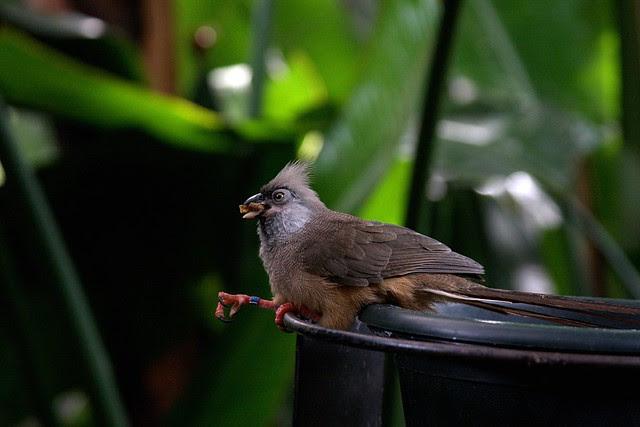 aviary birds, oregon zoo