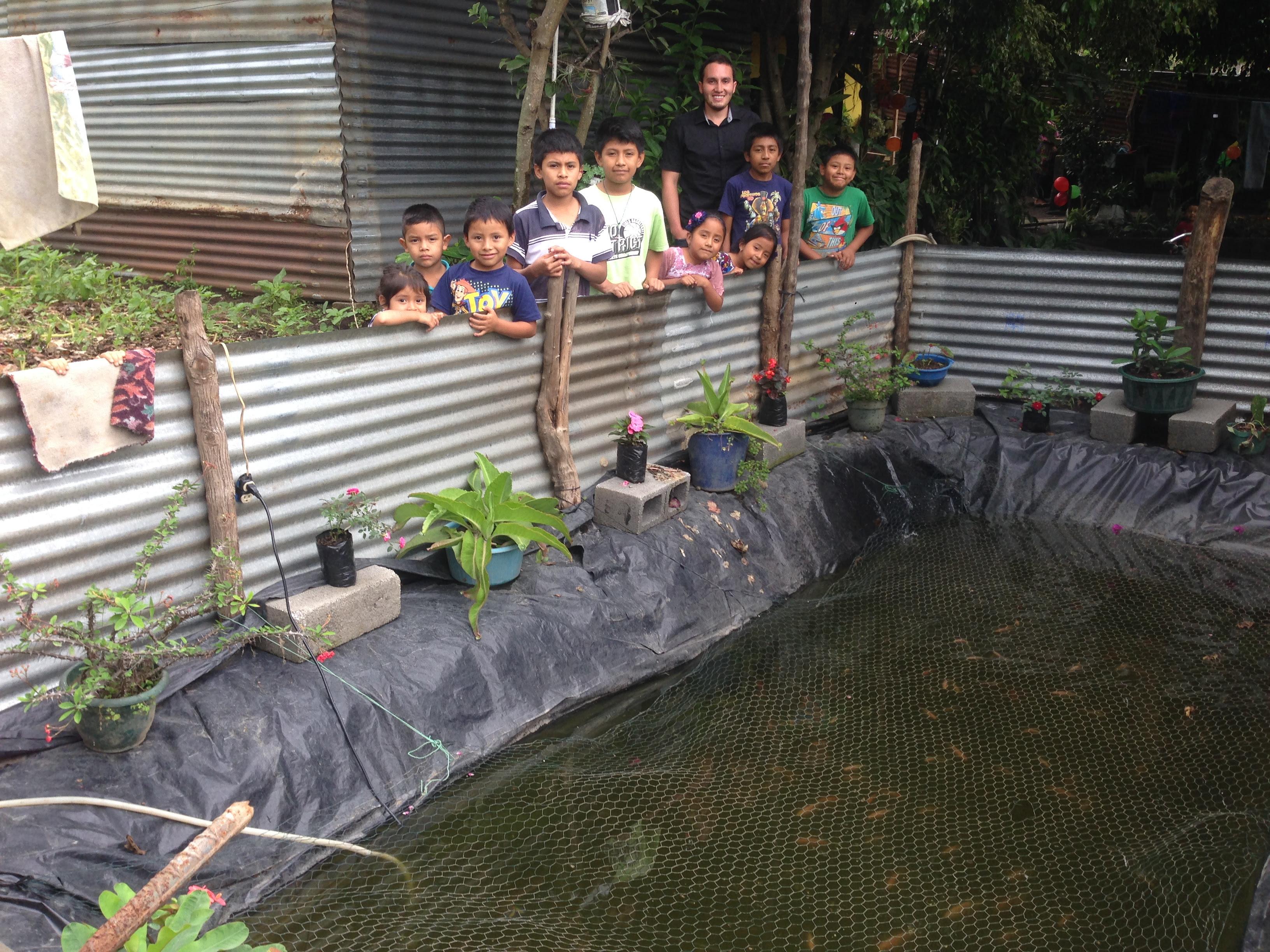 Tilapia Pond Backyard