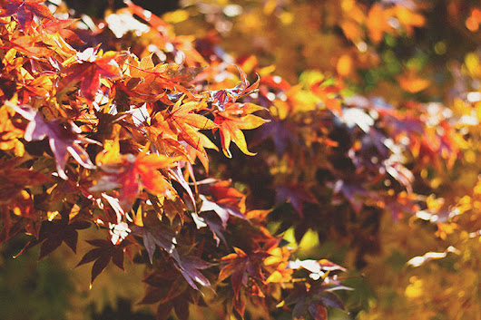 Fall Thoughts: The Best Season for Outdoor Living