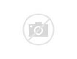 Cat Food Ratings