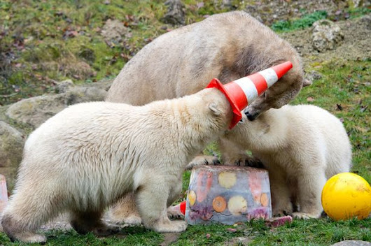 Some polar bears had a party and things got massively out of hand