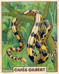 gilbert reptile 4
