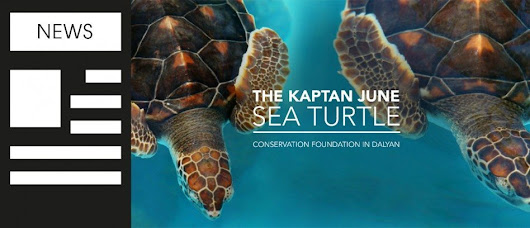 Turtles need websites too - responsive website design