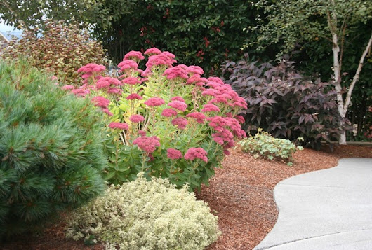 Jump-Start Your Dazzling Fall Garden With Just 1 Simple Plant