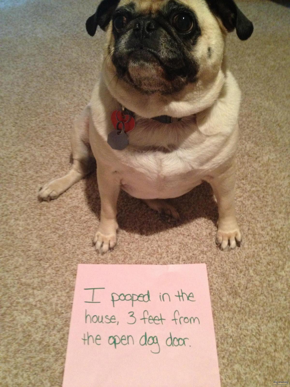 dog shaming 12 32 Hillarious Public Shaming of Dogs