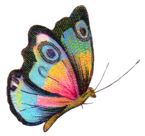 gambar kupu kupu lengkap kumpulan gambar lengkap