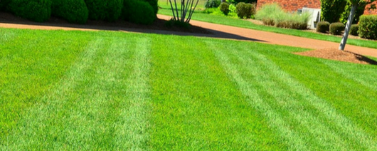 6 Lawn Care Mistakes That Can Ruin Your Yard in Phoenix