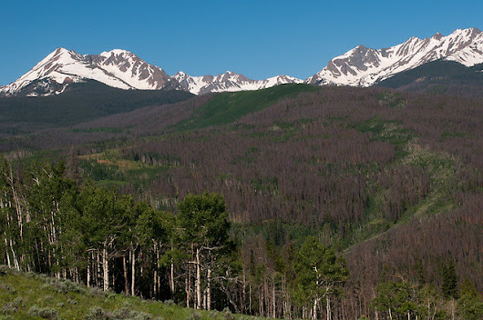 Climate Change-Fueled Forest Loss in Colorado Shows Need for More Wilderness Protections