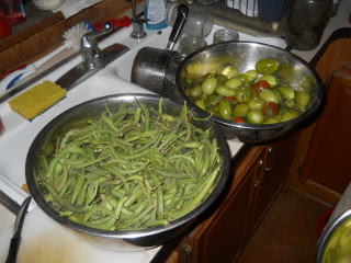 Final Green Beans & Tomatoes Haul
