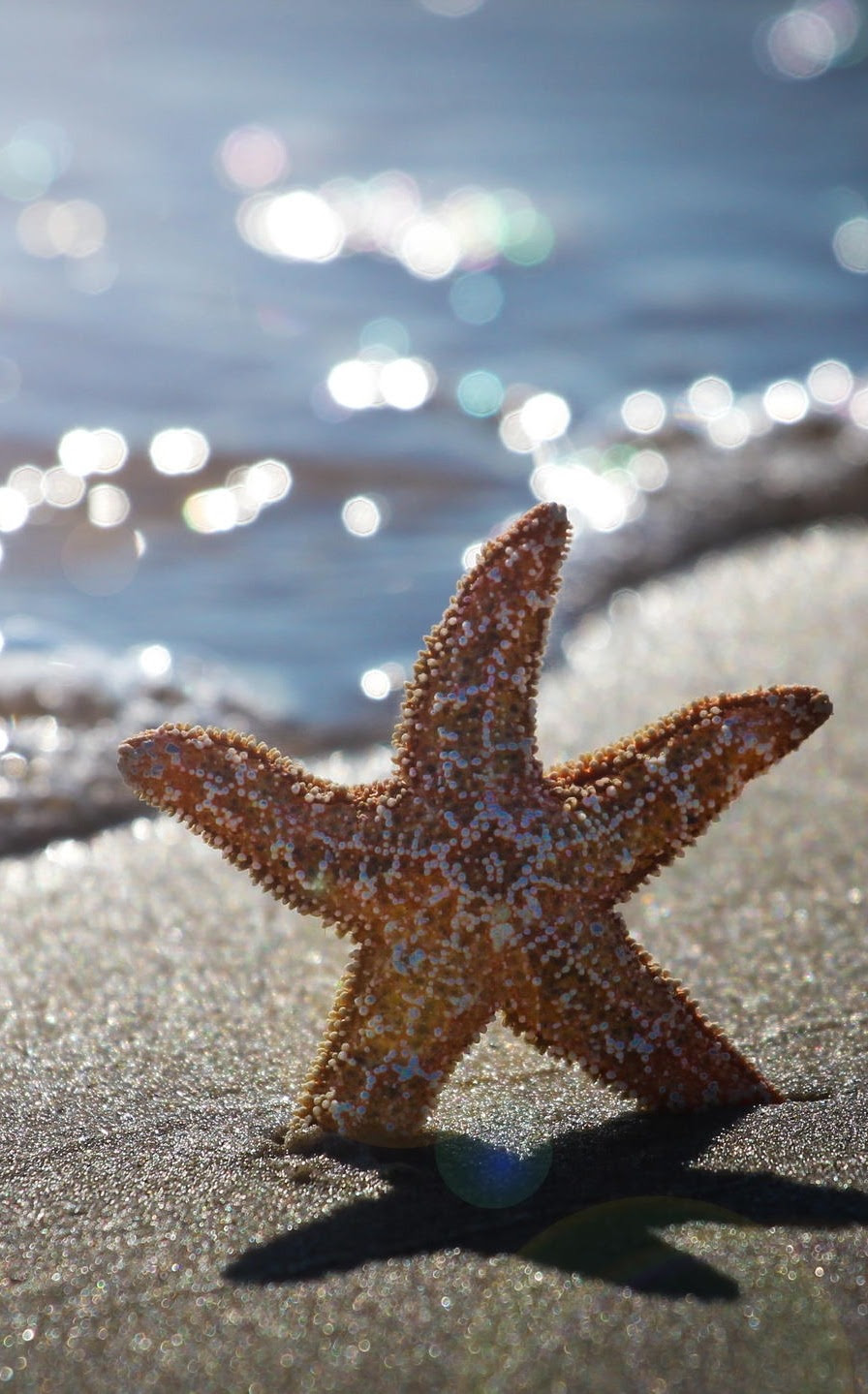 heaven-ly-mind:  Summer starfish in AC by Michel Bellemare on 500px