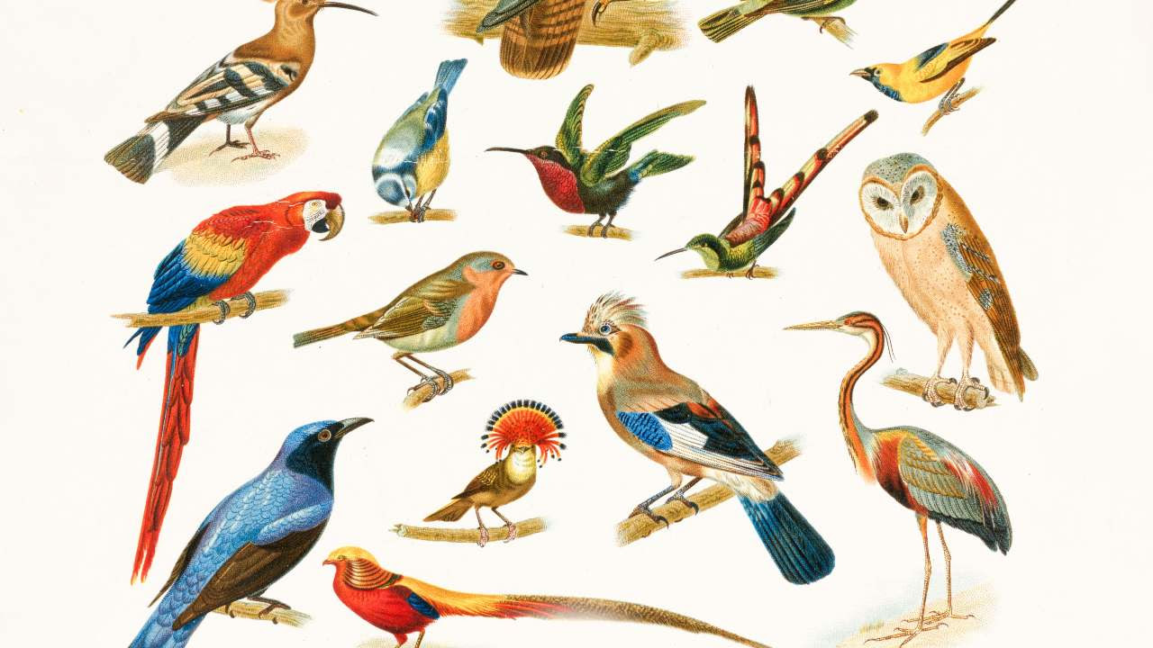 A study found that there are at least 50 billion wild birds that live on our planet and the number can go as high as 428 billion.