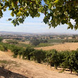 Paso Robles Wine Tasting Coupons - Save Money on Tasting Fees