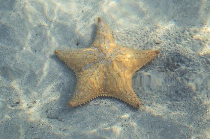 Deniz Axipixde Balık Ve Deniz Yıldızı Boyama