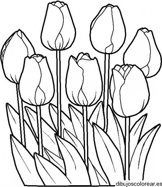 Dibujo De Un Ramo De Tulipanes