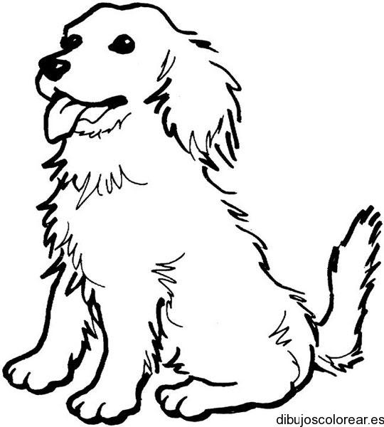 Dibujo Del Perro Lassie