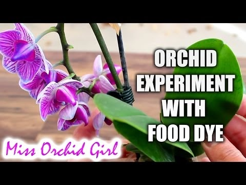 ORCHID EXPERIMENT IS SAP REUSED FROM FLOWER SPIKES?
