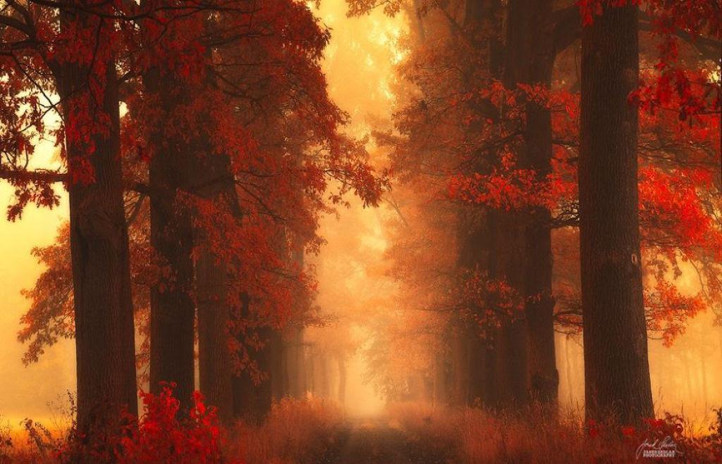 Os bosques outonais oníricos de um fotógrafo tcheco 16