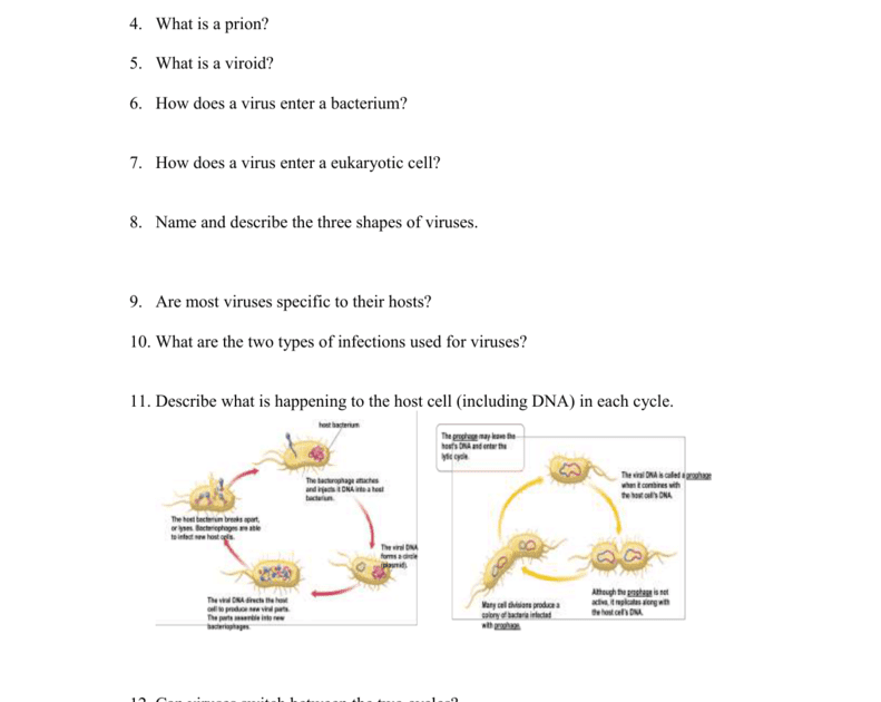 35 Chapter 18 Viruses And Bacteria Worksheet Answer Key ...