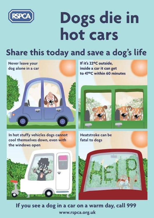 RSPCA , dogs die in hot cars. Save a dogs life today !!