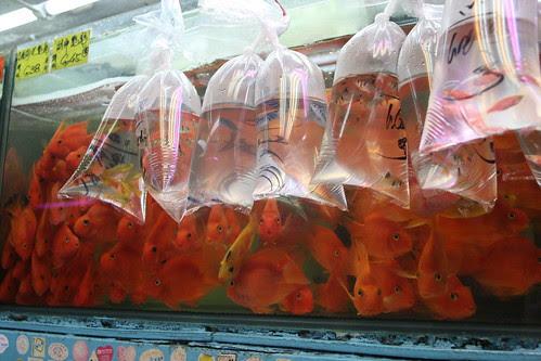 Goldfish market, Mong Kok