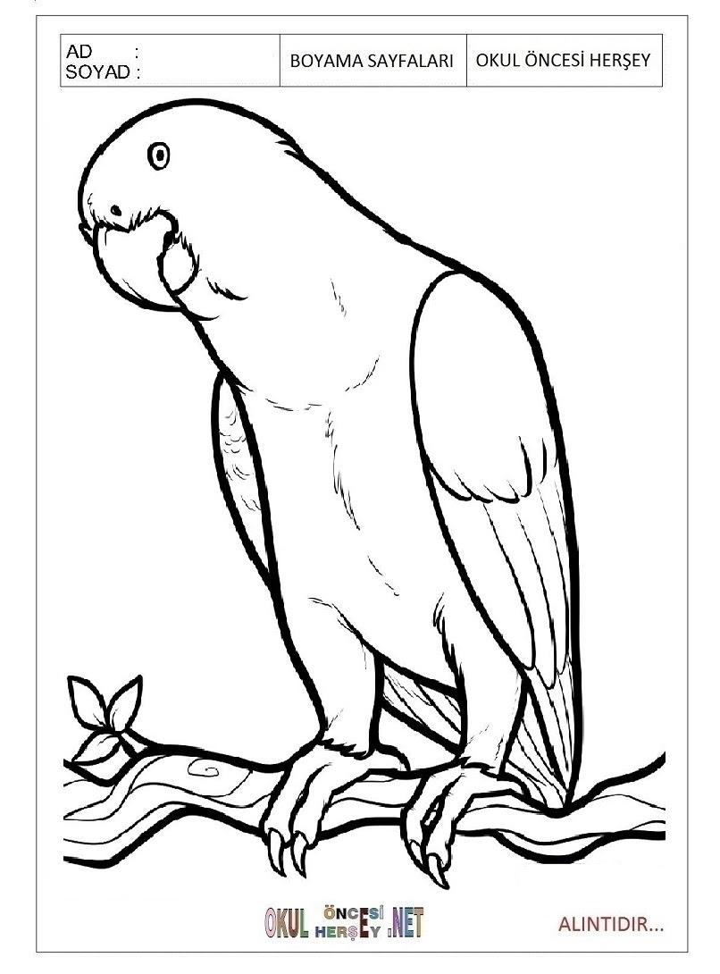 Papagan Resmi Boyama Bahattinteymuriom
