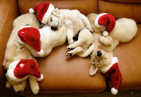 """coldy: """" seasons-of-lov3: """" """" Puppy! on We Heart It. """" """" ALL YEAR ROUND WINTER/CHRISTMAS BLOG http://coldy.tumblr.com """""""
