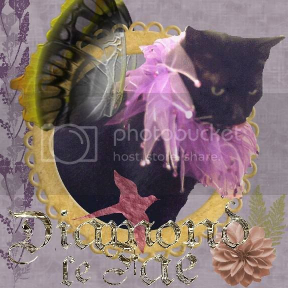 House Panther,Miss Diamond,Domestic Cat,Fairies,Fantasy