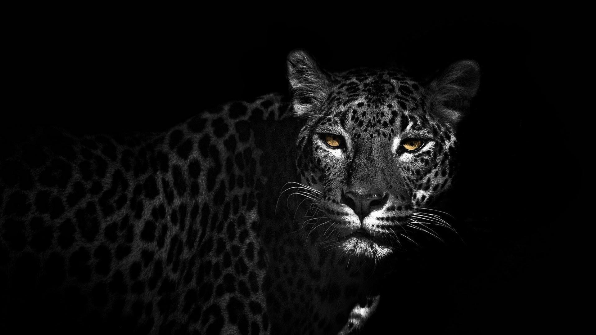 Black Jaguar Wallpaper 4k Artistic Joyful
