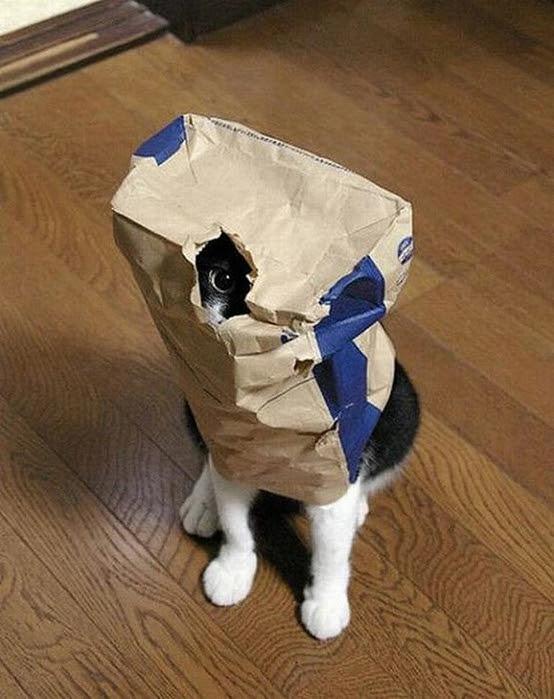 hidingcats05 (554x700, 256Kb)