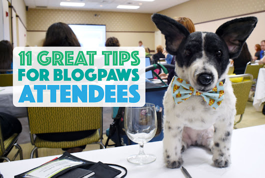 11 Great Tips for BlogPaws Attendees - The Broke Dog