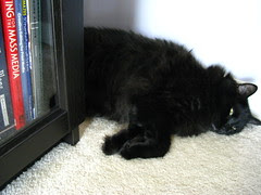 Huggy Bear napping by the book shelves