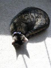Maggie's Batman shadow
