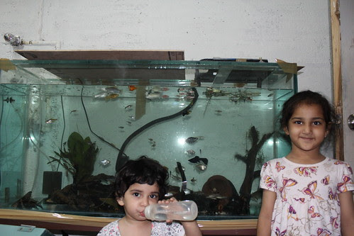 Marziyas New Fish Tank.. by firoze shakir photographerno1