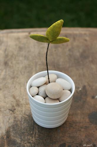 felted seedling