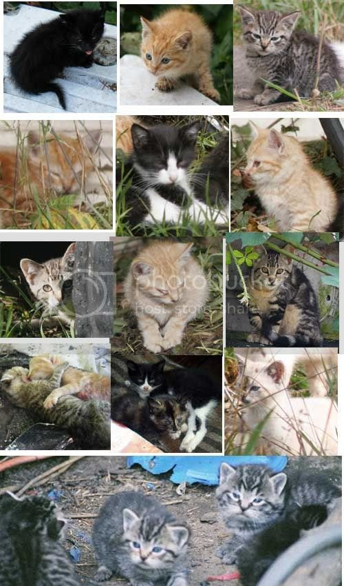 Remembering the unknown feral kittens, lives ended before they began