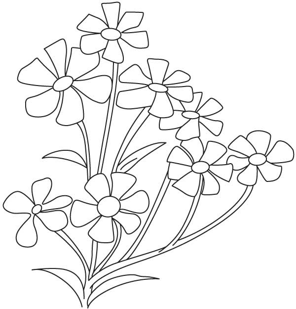 Small Babys Breath Flower Download Free Small Babys Breath Flower For Kids Best Coloring Pages