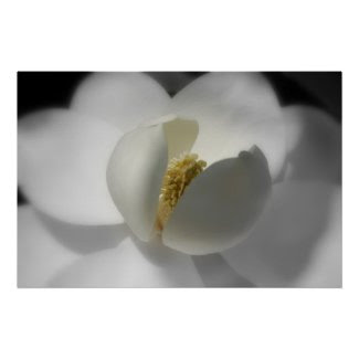 Southern Magnolia Poster print