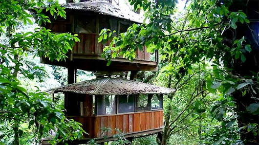 Ultimate Treehouses: Costa Casba: A Treehouse Collective : Video : Animal Planet