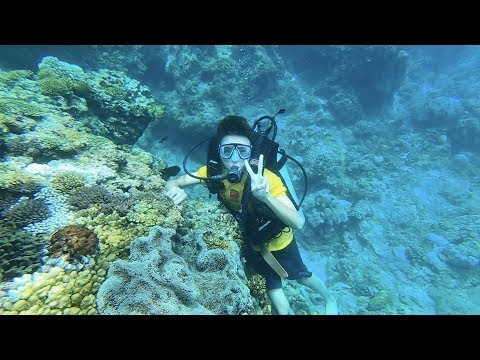 Lần Đầu Lặn Dưới Đáy Biển Ngắm San Hô Tuyệt Đẹp