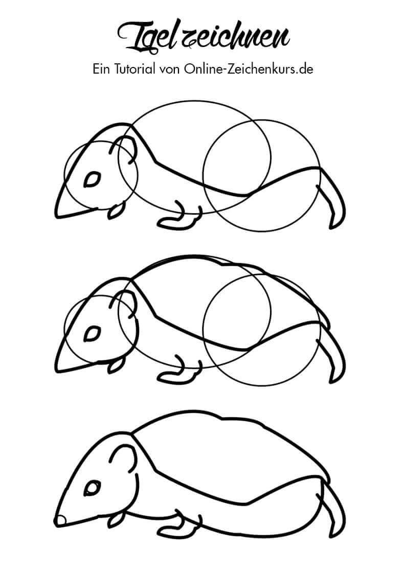 Wie Einen Igel Zeichnen Lernen Ausserdem Gibt S Kostenlose Ausmalbilder