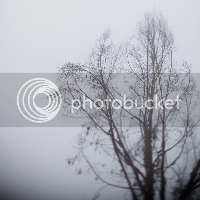 photo fog3B_zps9d638e25.jpg