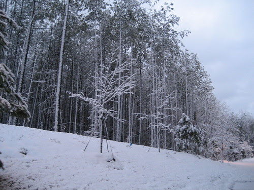 snow storm #2
