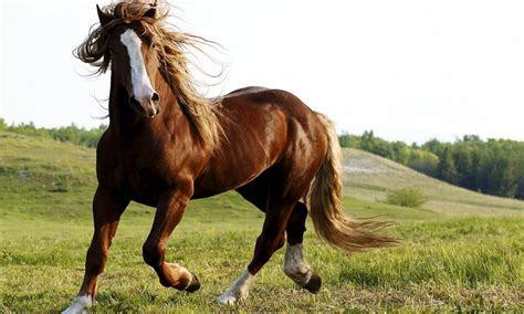 beautiful brown horse  grass horses poster