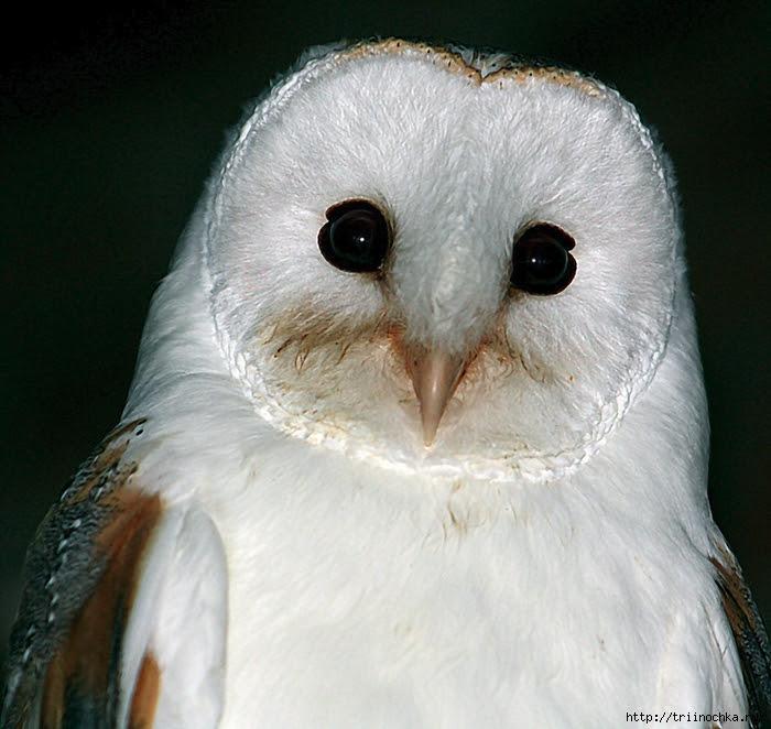 Owls Cologne enclosure!